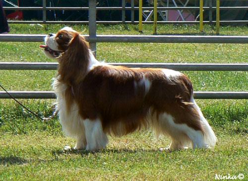 Border Union Dog Show