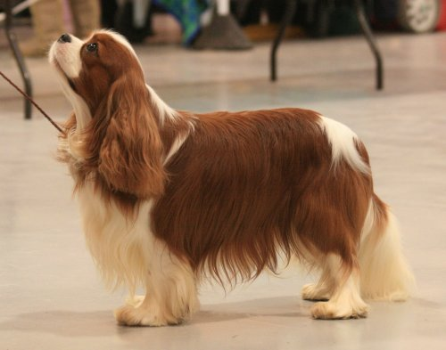 Welks Dog Show Results