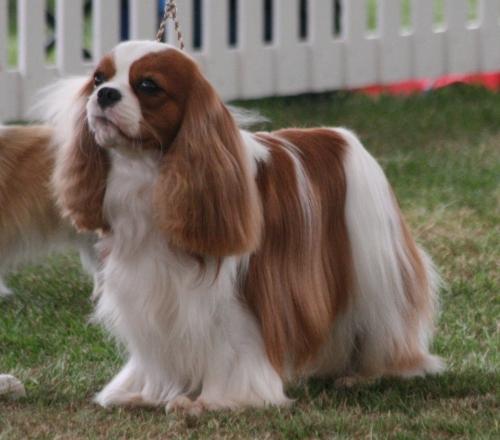 Darlington Dog Show Results